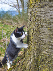 Cat curious behind tree