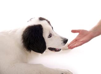 Hund schnuppert an Hand