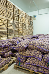 potato in storage house