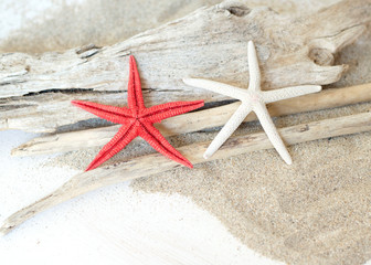 Starfish and wood - Tropical travel