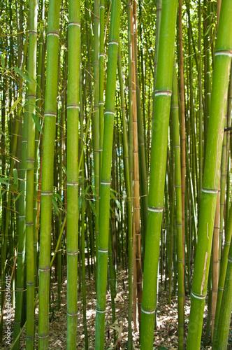 In de dag Bamboo Bamboo grove