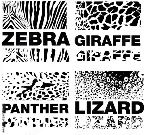 Animal Skin Pattern set of leopard zebra, panter, lizard