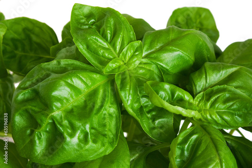 Fresh green basil leaves on white.