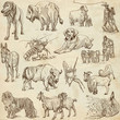 Animals around the world (paper set no. 5) - hand drawn