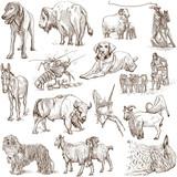 Animals around the world (white set no. 5) - hand drawn