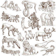 Animals around the world (white set no. 6) - hand drawn