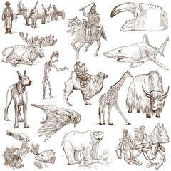 Animals around the world (white set no. 8) - hand drawn