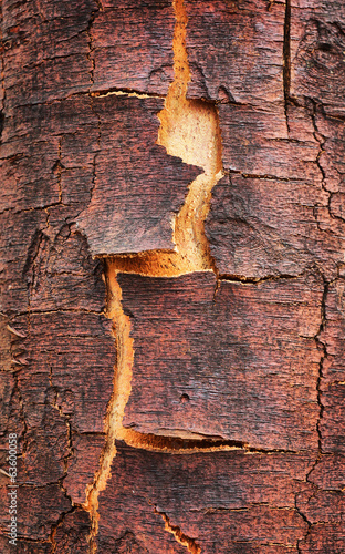 Old cracked birch bark