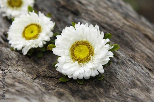 White daisy flowers and rustic wood texture