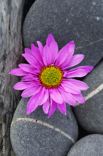 Pink gerbera and nature stone on gray pebble