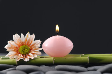 gerbera and thin bamboo grove and candle on pebble