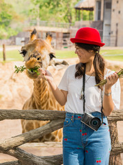 Women is feeding giraffe.