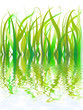 herbes aquatiques