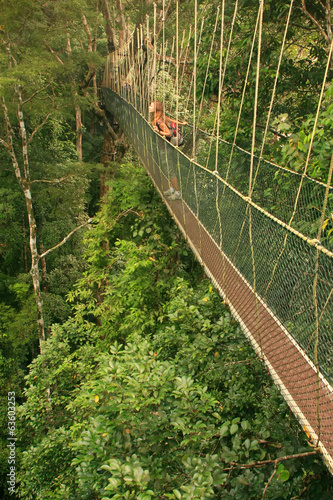 Tourist standing on canopy walkway, Taman Negara National Park,