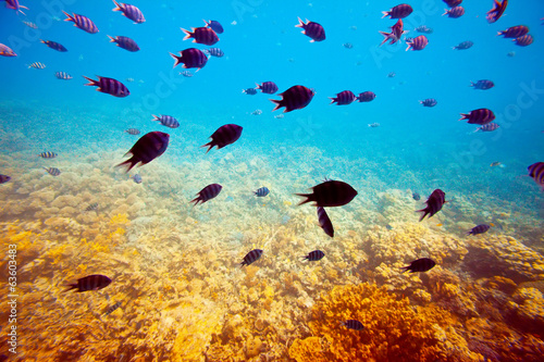 tropical fishes on coral reef area