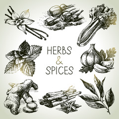 Kitchen herbs and spices. Hand drawn sketch icons