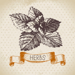 Kitchen herbs and spices. Vintage background with hand drawn
