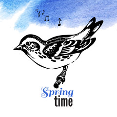 Vector illustration of hand drawn sketch bird. Spring time