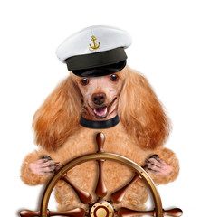 Dogs sailor.