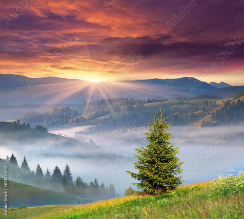 Papiers peints Morning Glory Foggy summer sunrise in the mountains