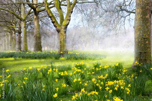 Papiers peints Jardin Art spring flowers in the English park