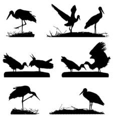 White Storks on the nest silhouette