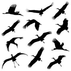 White stork in flight silhouettes