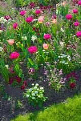 Leuchtendes Blumenbeet im Gegenlicht