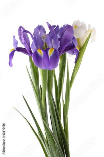 Foto op Canvas Iris Blue and white irises