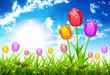 Obrazy na płótnie, fototapety, zdjęcia, fotoobrazy drukowane : Spring Landscape