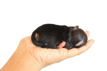Tiny Newborn On Human Hand