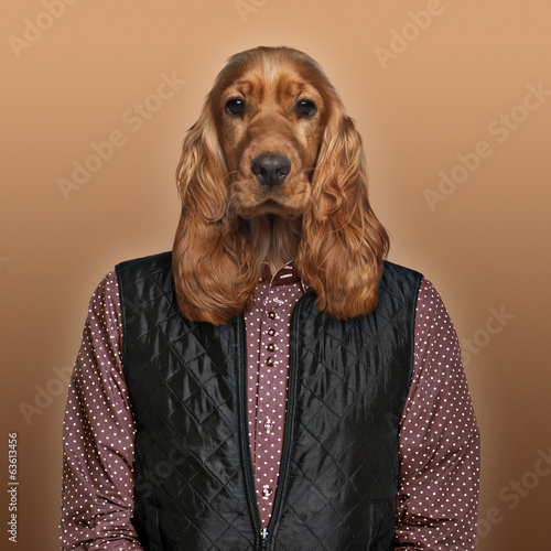 English Cocker spaniel wearing a shirt and jacket