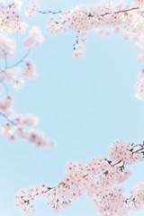 桜 青空 晴天 フレーム