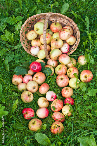 Red apples on the grass and in the basket.