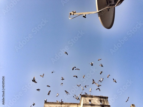 birds flying on roof
