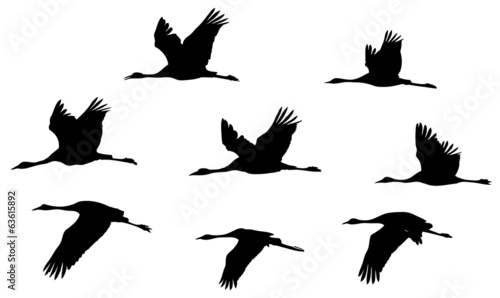 Common Crane in flight silhouettes