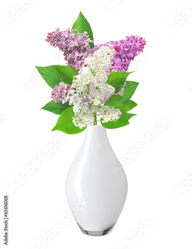 Beautiful Lilac branch in vase isolated on white