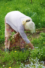 The grandmother tears a grass in a garden in the spring