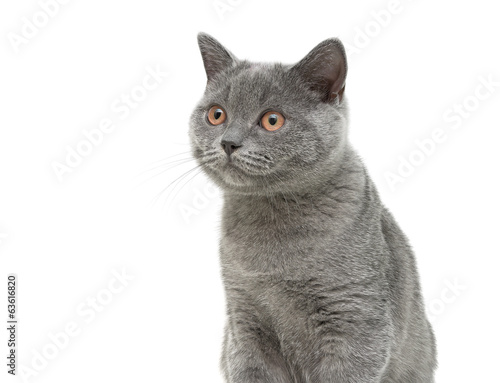 cat close-up on white background