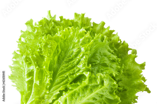 lettuce salad, fragment on a white background
