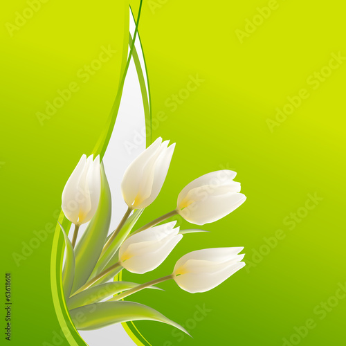 White tulips on a green card for birthday
