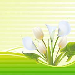 White tulip spring flowers bouquet