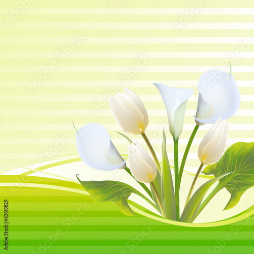 White tulip spring flowers bouquet