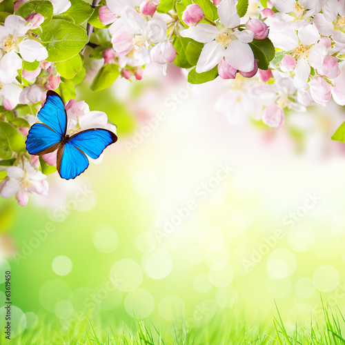 Spring background with free space for text