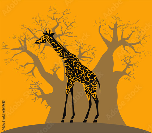 Giraffe and baobab on african savannah