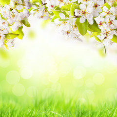 Easter background with apple blossoms