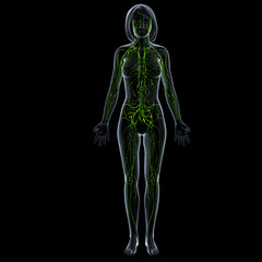 Anatomy of female lymphatic system in black