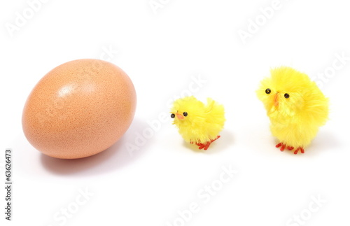 Easter chickens with fresh egg on white background