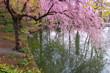romantischer Japan-Garten