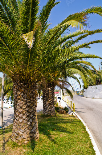 Winding coastal road and palm trees on greek island at morning